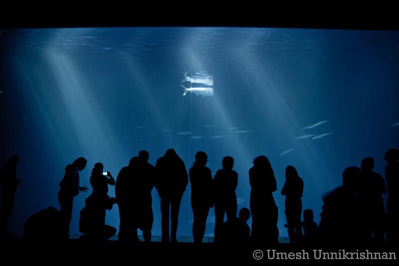 Monterey Bay Aquarium 055.jpg