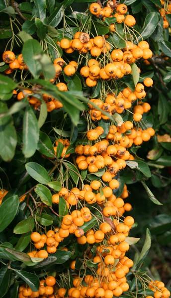 berries 1 - Copy.jpg