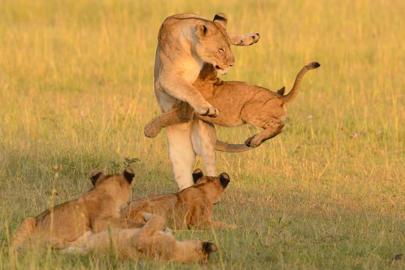 20160215__KET7394_Serengeti_Day_7.jpg