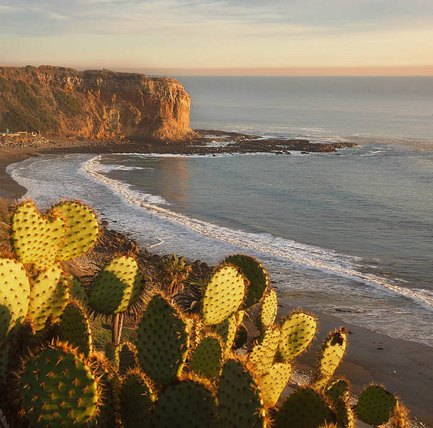 Cactus Coast - Palos Verdes Peninsula Los Angeles, California