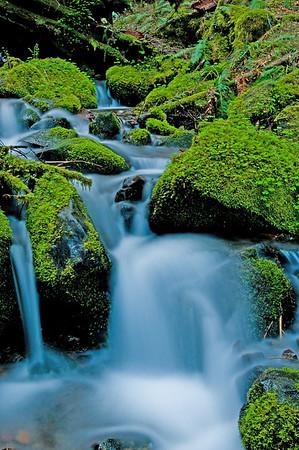 Rainier National Park 2009