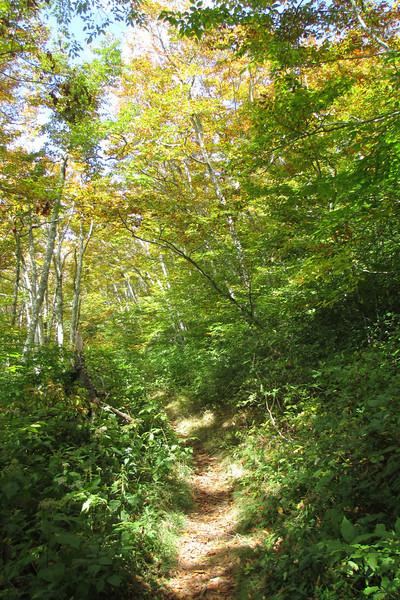 Ivestor Gap Trail -- 5,750'