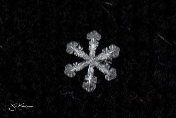 snowflakes-2587.jpg