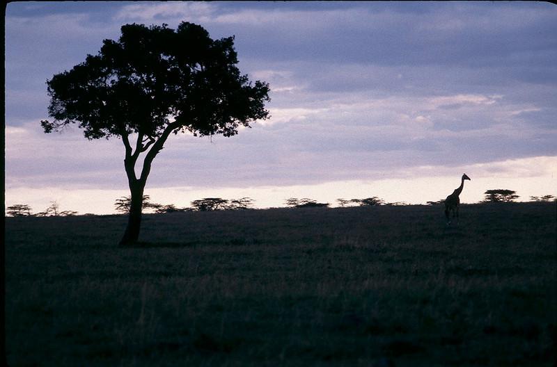 Kenya2_020.jpg