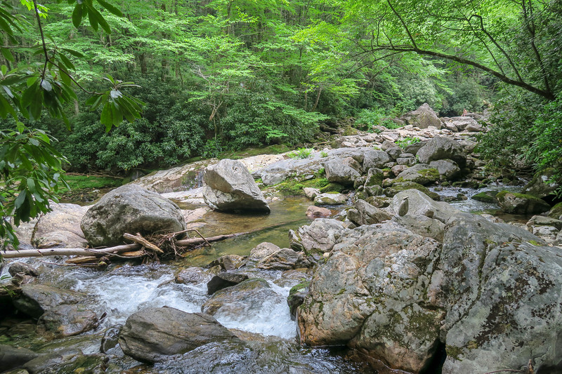 Greasy Cove Prong-East Fork Pigeon River Confluence -- 3,950'