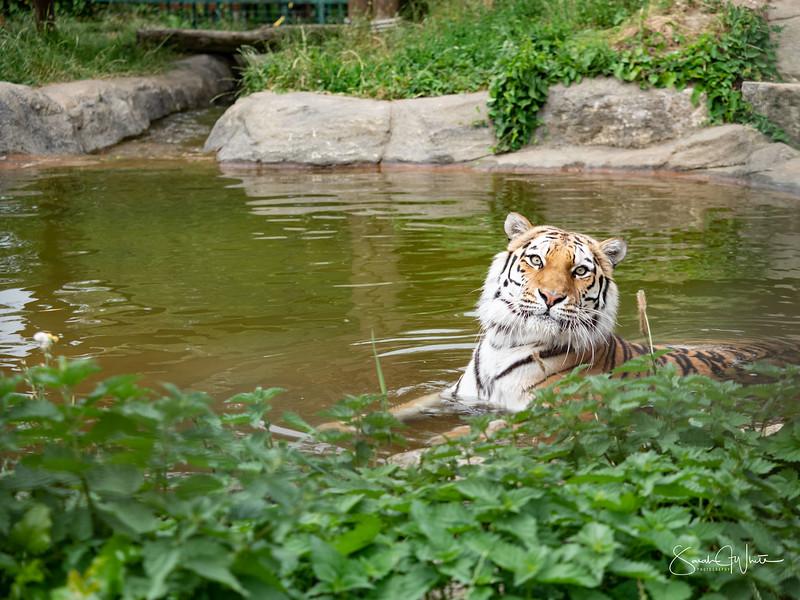 130719_Wildlife Paradise_2134.jpg