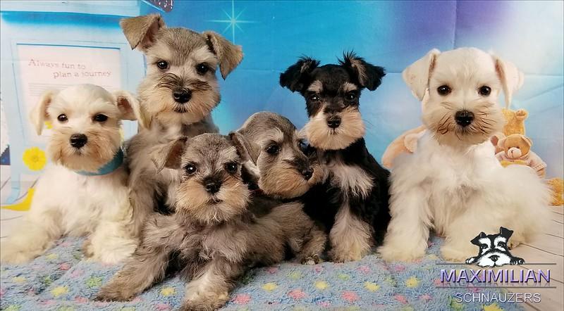 Wunderbar Pups 009.jpg