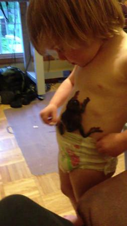 Frog in my Pants