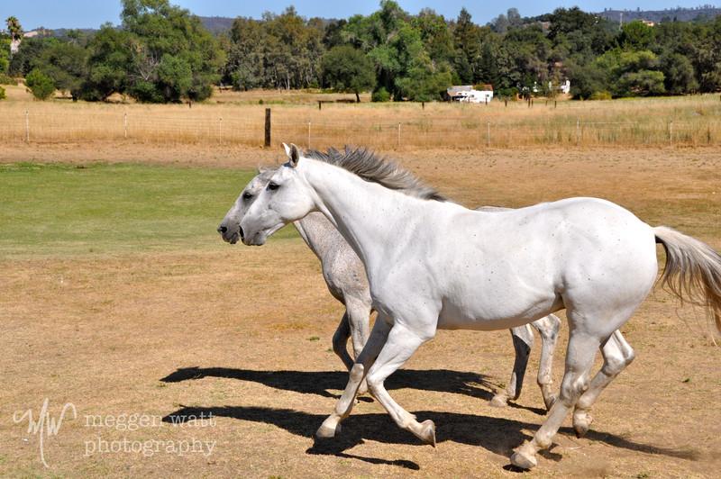 EB&Horses-089.jpg