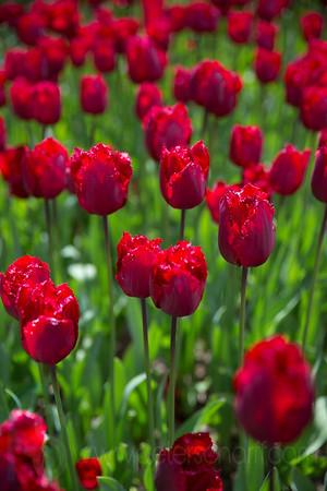 Springfields Gardens Spring 2015