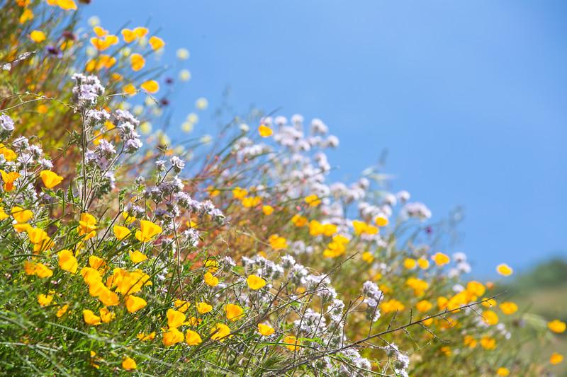 Spring Flowers B-232.jpg