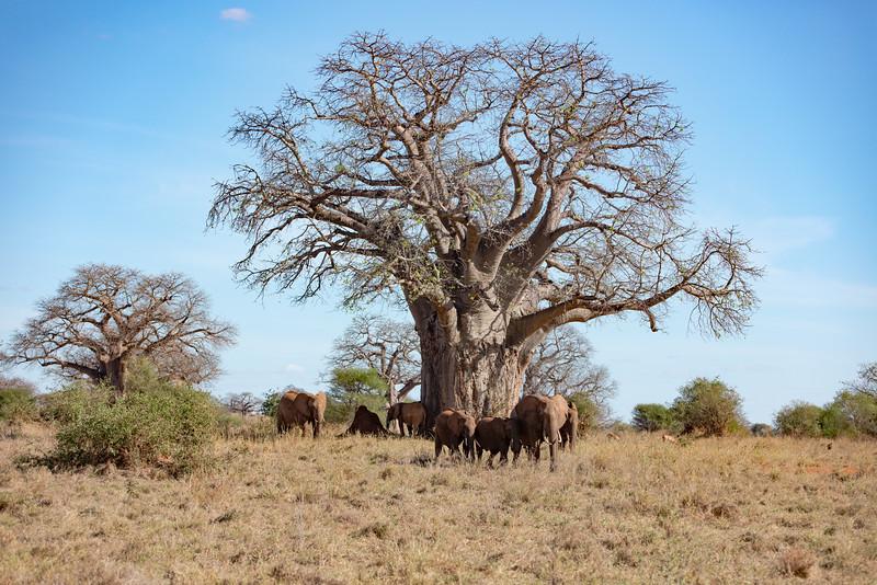 Africa - 102016 - 7889.jpg
