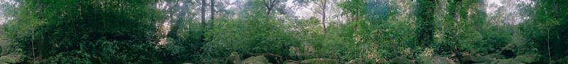 Regenwald 1