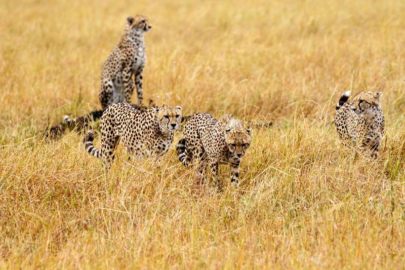 Kenya 2015-07649.jpg