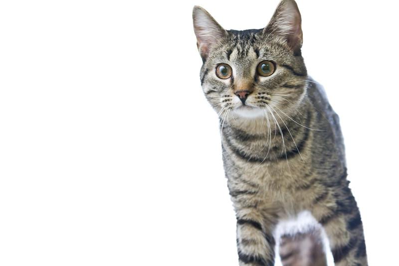 1202_Cats_137.jpg