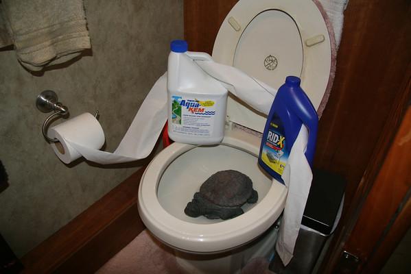 Toilet Treatments