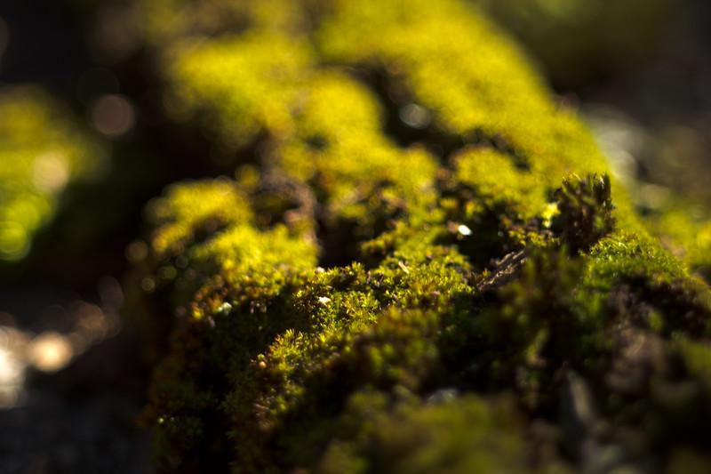Moss on the Tree 25