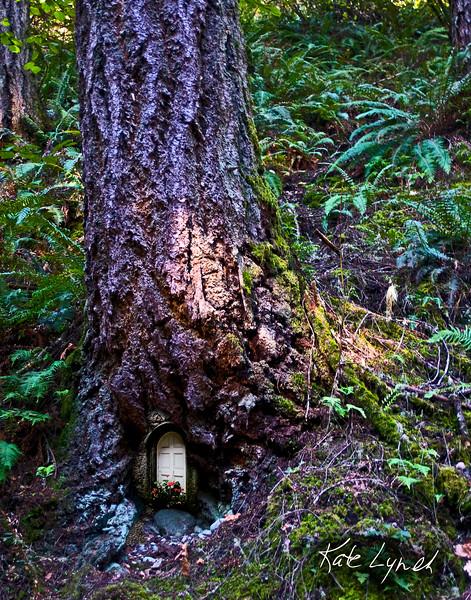 Seq-4272-TreeDoor11x14.jpg