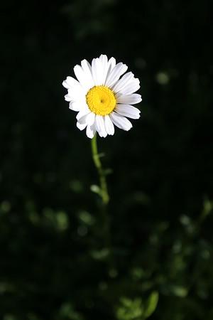 Flowers_060510_0149.JPG