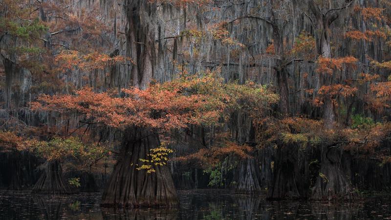Cypress_Swamps_1117_PSokol-877-Edit.jpg