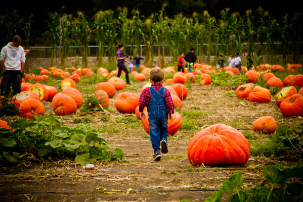 Children at the Pumpkin Patch
