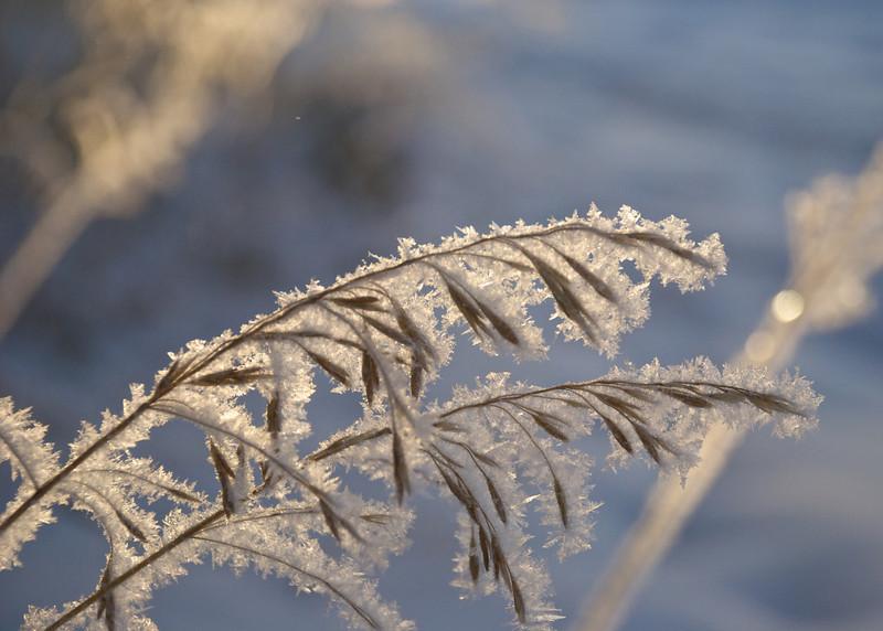 DSC_3391frostgrass.jpg