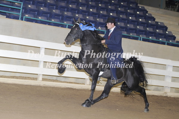 CLASS 37 AGED STALLIONS OPEN SPECIALTY