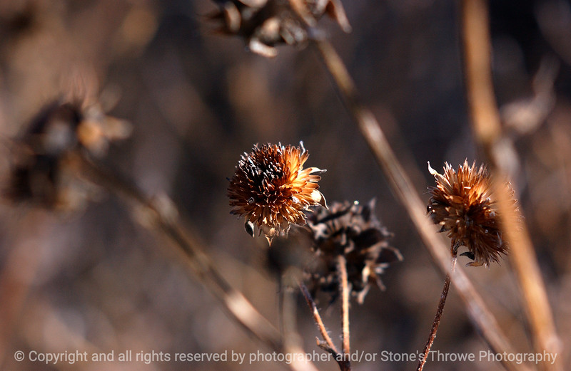 botanical-bosque_del_apache_nm-01dec06-3043