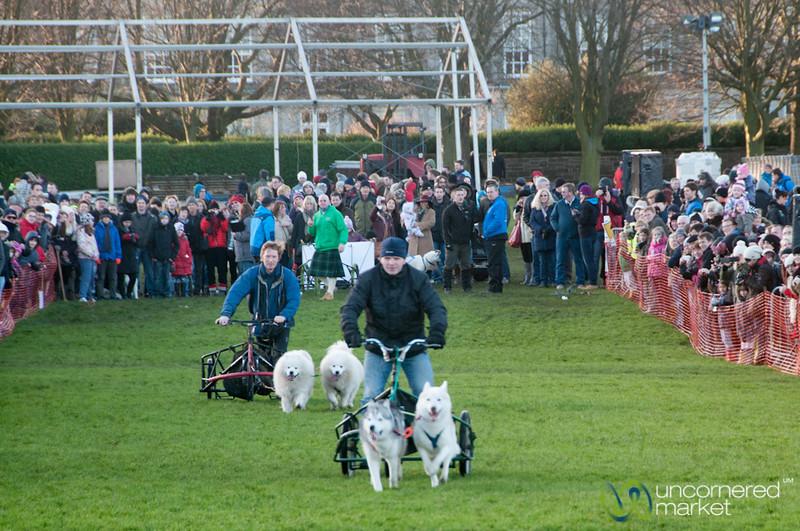Dogmanay Dog Races - Edinburgh, Scotland