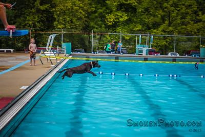 Dog Splash 2015