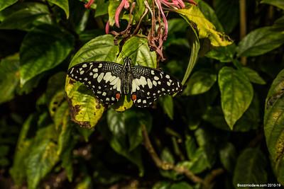 Butterflies & Moths 2018 - Set 1