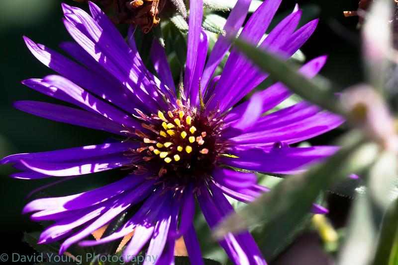 meadowlark 10-17-10-38.jpg
