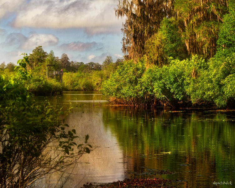 Tranquility At Lettuce Lake