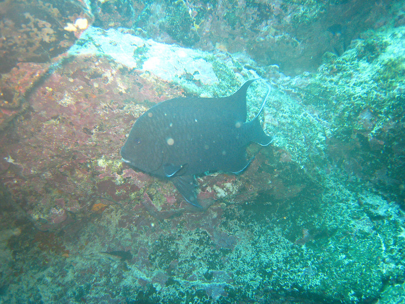 Diving in the Galapagos (374 of 392)