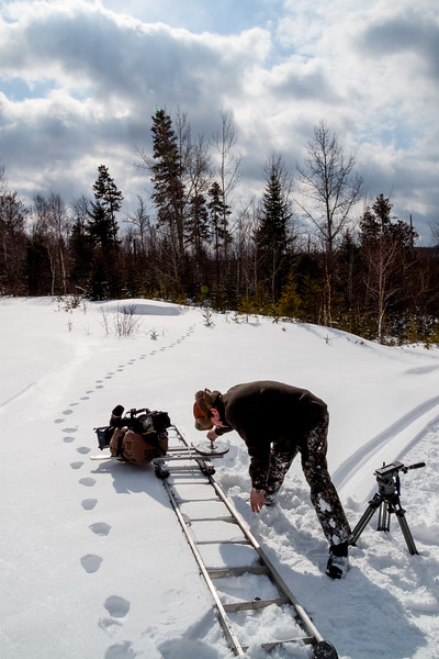 Filming Lynx Tracks-4.jpg