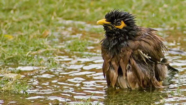 Okhla Bird Sanctuary, India