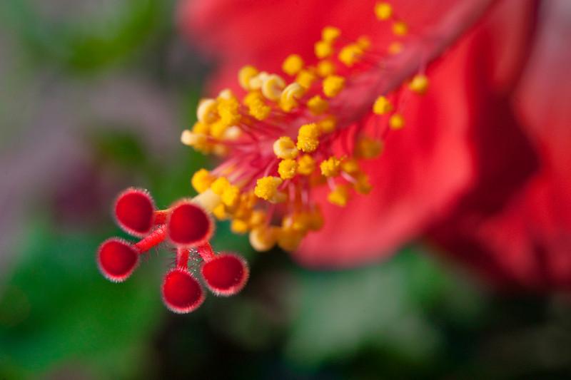 090817_MPO-Flowers_37