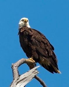 Baytown Eagles 3-25-2010