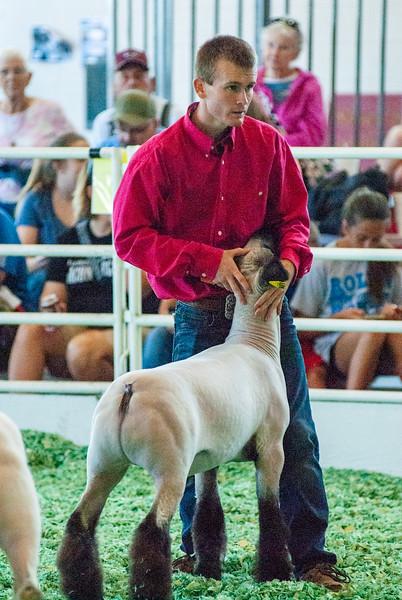 ks_state_fair_2019_lambs-14.jpg