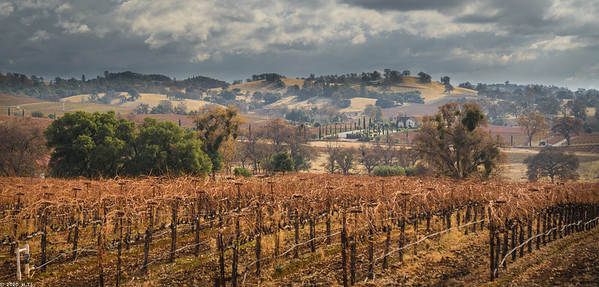 wine country in december