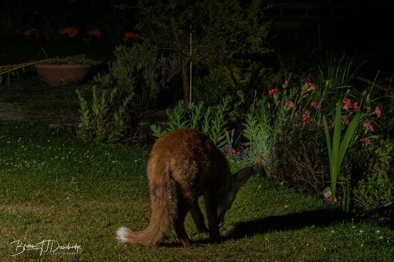 Garden Night Shoot-7341.jpg