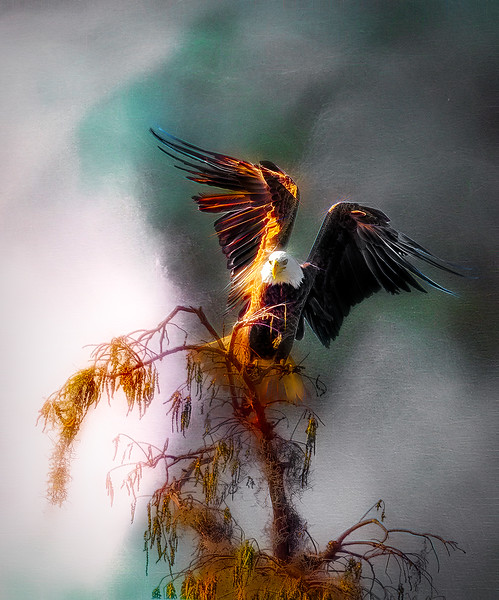 eagle2_DSC9570-copy.jpg