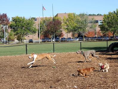 EDITED - Melrose Dog Park