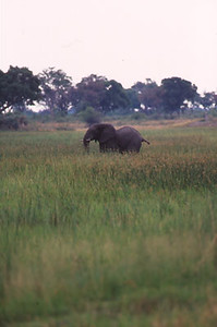 africa0071.jpg