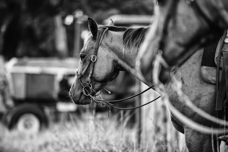 Breely Barthle Ranch B&W 2 (14 of 20).jpg
