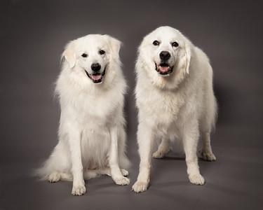 Warner Dogs