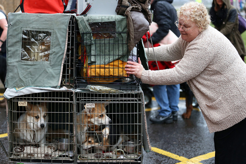 . A woman pushes a trolley containing her dogs as she arrives to attend the first day of Crufts dog show at the NEC on March 6, 2014 in Birmingham, England. Said to be the largest show of its kind in the world, the annual four-day event, features thousands of dogs, with competitors traveling from countries across the globe to take part. Crufts, which was first held in 1891 and sees thousands of dogs vie for the coveted title of \'Best in Show\'.  (Photo by Matt Cardy/Getty Images)