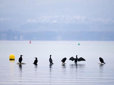 Les oiseaux de la grande Cariçaie NE
