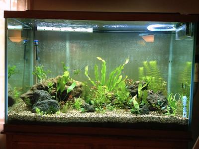 Planted Aquarium #1
