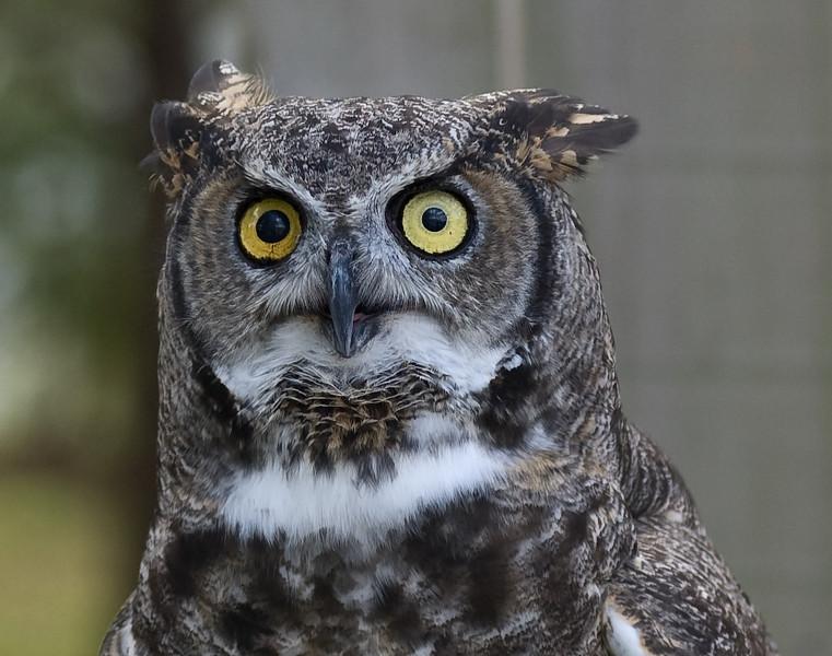 Owl-0028.jpg